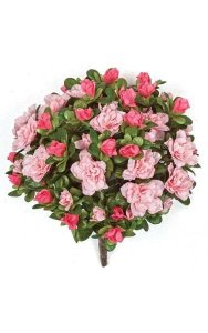 "12"" Azalea Bush - 154 Leaves - 14 Flowers - 54 Buds - Tutone Pink"