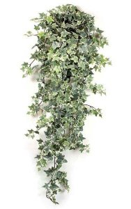 "48"" Frosted Sage Ivy Bush - 730 Leaves - Variegated Green/White"