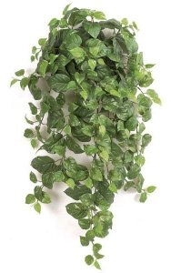 "36"" Pothos Bush - 250 Leaves - Green/Yellow"