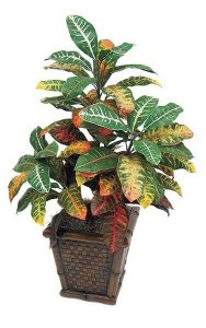 3' Croton Bush - 72 Leaves - 3 Stems - Multi-Color - Bare Stem - FIRE RETARDANT