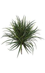 "28"" Liriope Grass - 8"" Stem - Tutone Green"