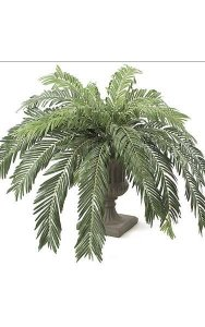 "Small Cycas Palm Cluster - 24 Fronds - 60"" Diameter - Green - Bare Stem"