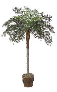 7' Phoenix Palm Outdoor - Synthetic Trunk - 24 Fronds - Green - Bare Trunk