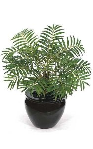 "17"" Neanthe Bella Palm - 26 Green Fronds- Bare Stem"