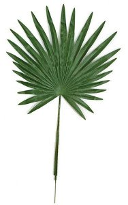 "32"" Fan Palm Leaf - Dark Green 19"" wide"