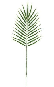 "30"" Date Palm Branch - 25 Leaves - Green"