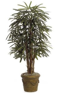 5' Lady Palm - Natural Trunks - 90 Fronds - Green - Weighted Base