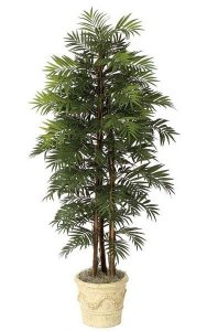 6' Parlour Palm - 3 Natural Trunks - 149 Fronds - Green - Weighted Base