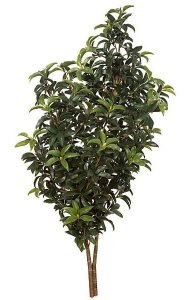 "50"" Mountain Laurel - 30"" Width - Green - Bare Stem"