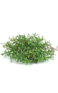 Plastic Mini Leaf Half Ball - 87 Green Leaves - 12 Light Brown Roots