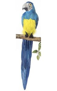 "28"" Macaw - Tutone Grey Beak - Blue"