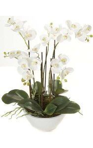 "24"" Potted Phalaenopsis Orchid - 6 White Orchid Stems - Green Leaves - White Pot"