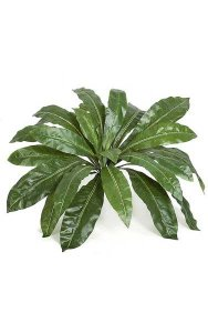 "Birds Nest Fern Cluster - 24 Leaves - 33"" Width - Green"