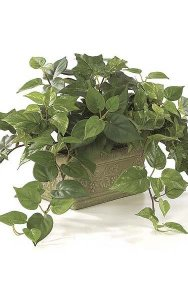 "10"" x 22"" Potted Sage Ivy, Philo, and Pothos Mix  - Green"
