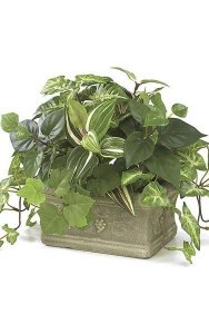 "9"" x 12"" Potted Mixed Foliage - Green"