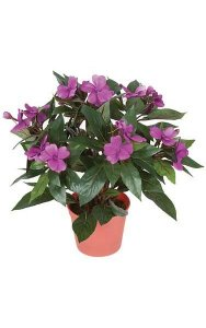 "14"" Impatiens Bush - 136 Leaves - 16 Flowers - 3 Buds - Dark Lavender"