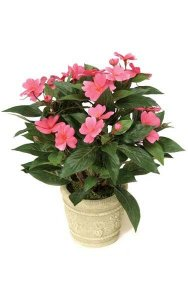 "14"" Impatiens Bush - 136 Leaves - 16 Flowers - 3 Buds - Cerise"