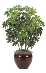 4' Baby Schefflera - 544 Leaves - Green/Yellow - Bare Stem