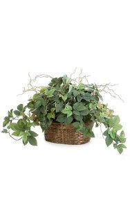 "15"" Potted Mixed Maple Ivy/Philo Leaves with Roots in Wicker Basket"