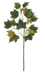 Norway Maple Branch - 12 Green Leaves - 4 Sets of Mustard Flowers