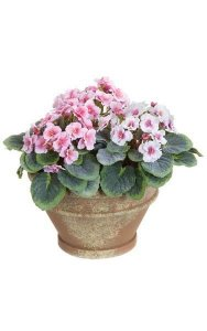 "8"" x 9"" Violet Flower Pot - Pink/White Flowers with Tutone Green Leaves - 4.5"" Round Brown Pot with Paint"