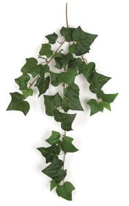 "35"" English Ivy Vine - 38 Leaves - Green"