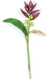 4.5' Banana Flower - Soft Touch - 2 Leaves - 1 Flower - 12 Bananas - Burgundy