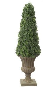 "53"" Ming Aralia Cone Topiary - Natural Trunk - Green - Weighted Base"