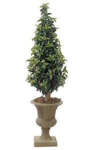 5' Outdoor Laurel Cone Topiary - Natural Trunk - Green - Weighted Base