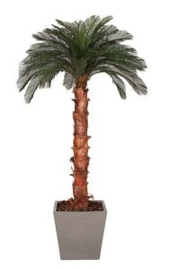 9' Cycas Palm Tree - Natural Boot Trunk - 36 Fronds - Bare Trunk