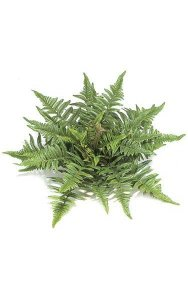 "14"" Artificial Tree Fern - 40 Fronds - 18"" Width - Green - Bare Stem"