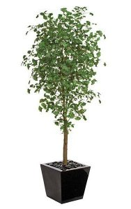 "7' Ginkgo Tree - 1,860 Green Leaves - 33"" Width - Weighted Base"
