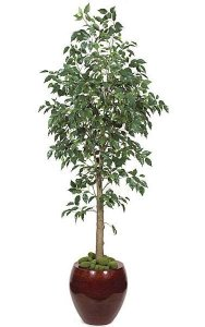 6' Benjamina Ficus Tree - 1,543 Green Leaves - 3' Wide - Weighted Base