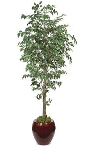 7' Benjamina Ficus Tree - 2,240 Green Leaves - 3.5' Wide - Weighted Base
