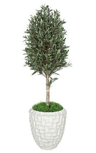 5' Outdoor Olive Tree Topiary - Natural Trunk - Weighted Base - Custom Made