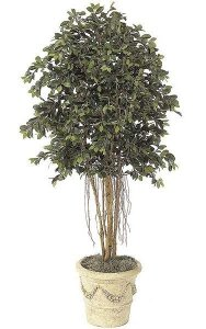 6.5' Ficus Tree with Air Roots - Natural Trunks - 2,880 Leaves - Weighted Base