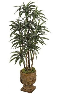 6' Dracaena Warneckii - Natural Trunks - 280 Leaves - 10 Heads - 5 Stems - Green/White - Weighted Base
