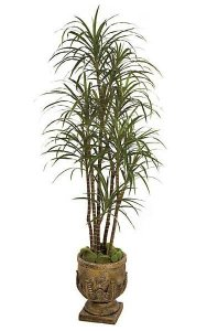 6.5' Dracaena Marginata - Natural Trunks - 219 Leaves - 7 Heads - Green/Red - Weighted Base