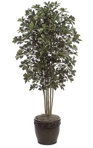 7' Black Olive Tree - Natural Trunks - 3,770 Leaves - Green - Weighted Base