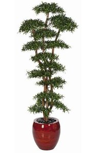 "8' Podocarpus Shelf Tree - Natural Trunks - 15,768 Green Leaves - 36"" Width - Weighted Base - Custom Made"