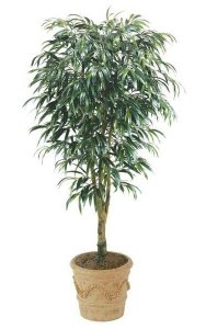 8' Ficus Alii Tree - Natural Trunk - 1,539 Leaves - Green - Weighted Base