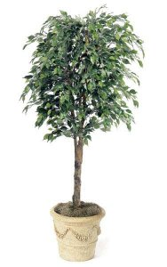 6.5' Artificial Ficus Tree - Natural Trunk - 1,951 Leaves - Green - Weighted Base