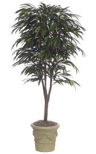 7' Ficus Alii Tree - Natural Trunk - 1,261 Leaves - Green - Weighted Base