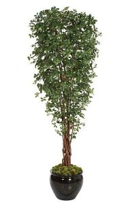 "10' Black Olive Tree - Natural Trunks - Green Leaves - 44"" Width - Weighted Base"