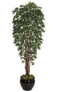 "10' Lychee Tree - Natural Trunks - Green Leaves - 48"" Width"