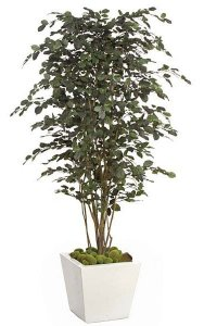 "6.5' Beech Tree - Natural Trunk - Green/Black Leaves - 46"" Width"