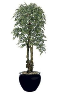 6.5' Ming Aralia Tree - Natural Trunks - 3,432 Leaves - Green - Weighted Base