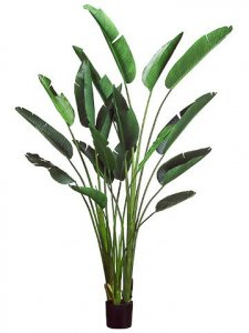 8' Bird of Paradise Plant w/18 Lvs. in Plastic Pot Green