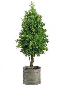 Boxwood Topiary Indoor/Outdoor in Tin Pot