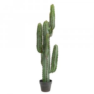 Green Aloe Column Plant in Gray/Lt Red Pot